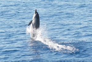 photo JDC Jonian Dolphin Conservation 1